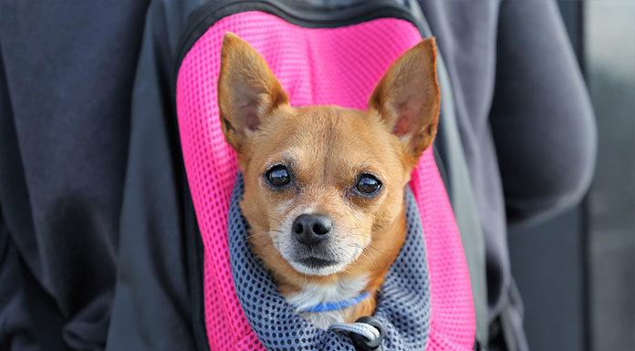 Transporter dla psa to bezpieczeństwo pupila w podróży