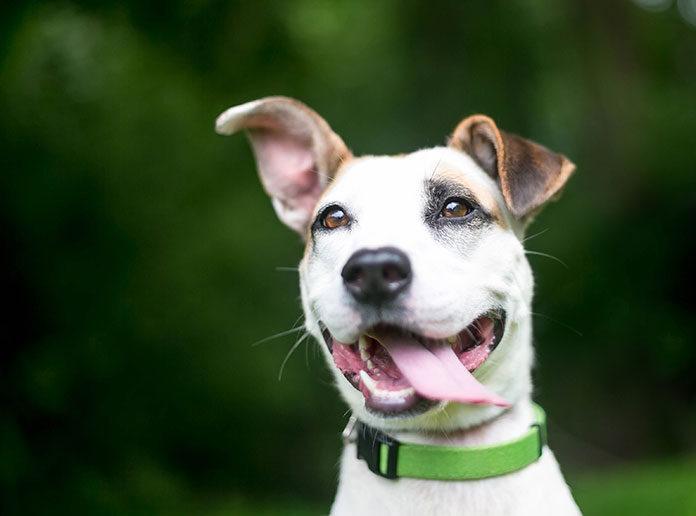 Jak naprawdę uszczęśliwić psa